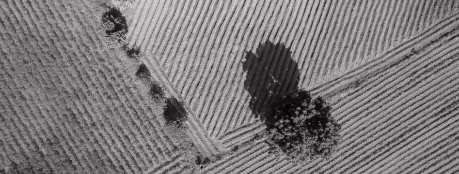 Top down shot of a farm field with a tree